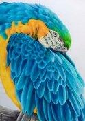 """All the blues"""" colour pencil on paper 41x29cm"