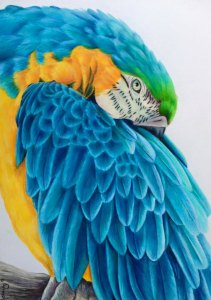 """All the blues"""" colour pencil on paper 41x29cm"