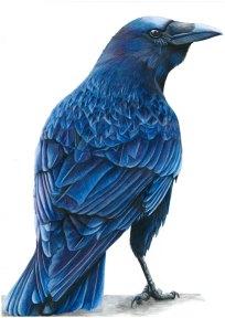 Midnight Crow
