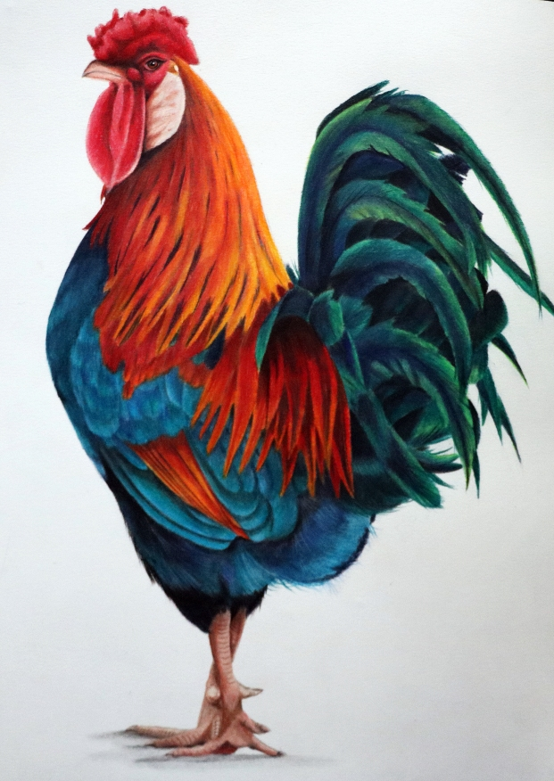 rooster photo