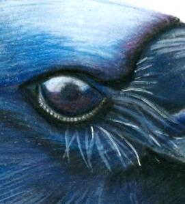crow eye