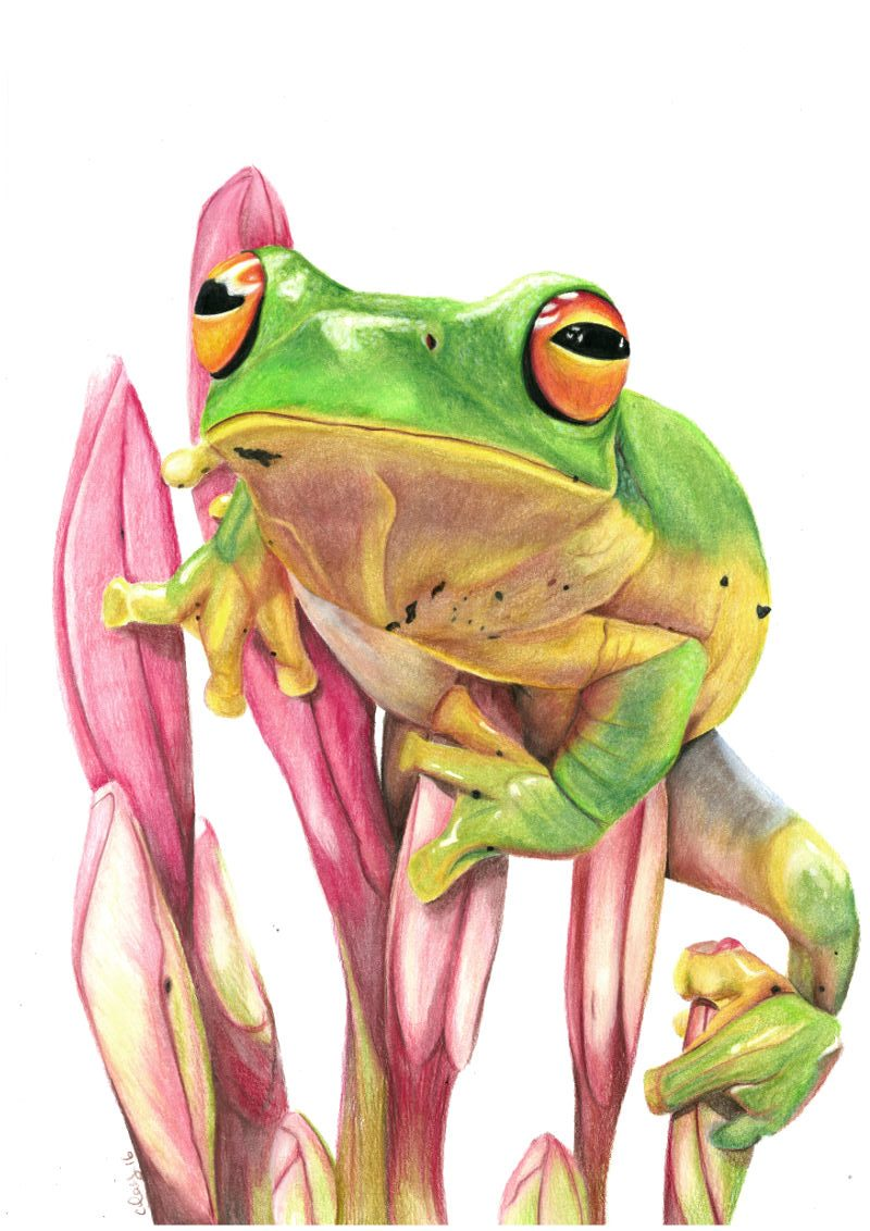 Realistic Tree Frog Drawings gallery | Cassa...