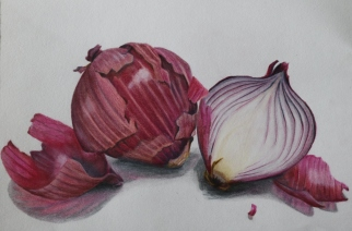 red onions. colour pencil on 21x29cm paper