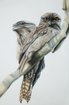 Now you see me. Colour pencil on 29x41cm paper