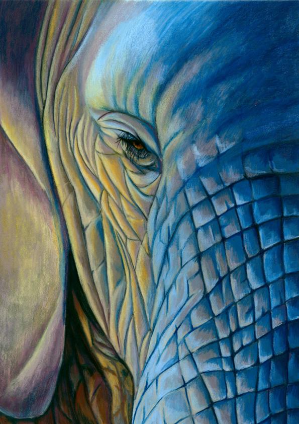 elephant for web