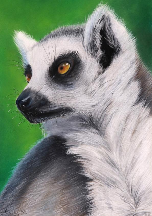 lemur for web